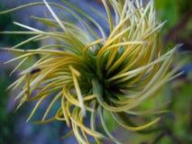 Planta Twisty Fotografía de archivo libre de regalías