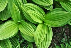 Planta verde Imágenes de archivo libres de regalías