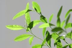 Planta verde imagenes de archivo