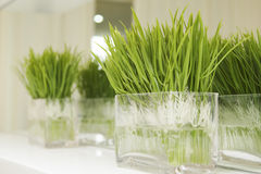Planta verde Foto de Stock