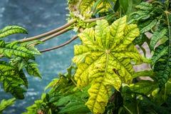 Planta verde Fotos de Stock Royalty Free