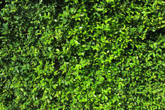 Planta verde Imagens de Stock