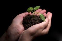 Planta verde fotos de archivo libres de regalías