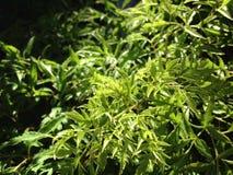 Planta verde Fotografía de archivo libre de regalías