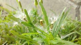 Planta verde Imagem de Stock