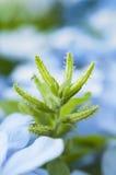 Planta verde Imagen de archivo