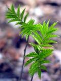Planta verde. Imágenes de archivo libres de regalías