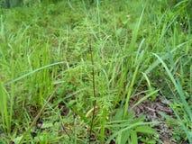 Planta verde Imagens de Stock Royalty Free