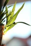 Planta verde Imagen de archivo libre de regalías
