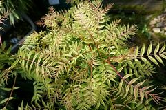 Planta verde fotografia de stock royalty free