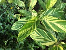 Planta verde Fotos de Stock
