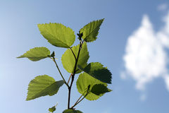 Planta verde abstracta contra el cielo azul Fotografía de archivo