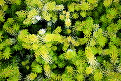planta verde abstrata Fotografia de Stock