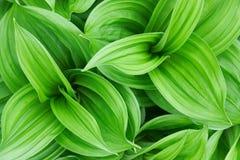 Planta verde bonita Fotografia de Stock