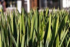 Planta verde bonita imagens de stock