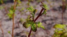 Planta verde bonita Imagem de Stock