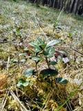 A planta verde bonita na floresta imagem de stock royalty free