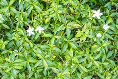 A planta verde com as flores pequenas no assoalho, texture o concreto, Imagens de Stock Royalty Free