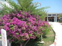 Planta verde com flores Fotografia de Stock