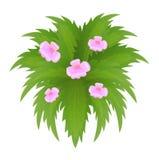 Planta verde com flores cor-de-rosa em um fundo branco Fotos de Stock