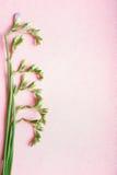 Planta verde com os botões florais no fundo do rosa pastel, vista superior Imagem de Stock Royalty Free