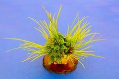 Planta verde con contraste azul imagen de archivo libre de regalías