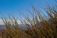 Planta verde con el cielo azul detrás imagen de archivo
