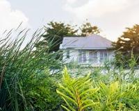 Planta verde con el fondo blanco de la casa en la naturaleza, color en colores pastel Imágenes de archivo libres de regalías