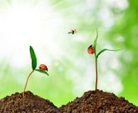 planta verde con el ladybug Imágenes de archivo libres de regalías