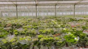 Planta verde con las flores amarillas Flores crecientes en una escala industrial almacen de video