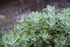 Planta verde con las fronteras blancas Foto de archivo libre de regalías