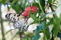 Planta verde con las mariposas Imágenes de archivo libres de regalías