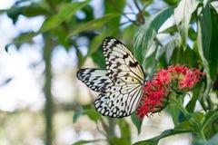 Planta verde con las mariposas Imagen de archivo libre de regalías