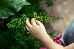 planta verde conmovedora de los fingeres de la mano del niño fotografía de archivo libre de regalías