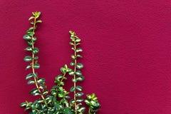 Planta verde contra una pared rosada Imagen de archivo libre de regalías