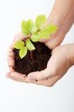 Planta verde crescente em uma mão Fotografia de Stock Royalty Free