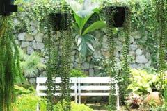 Planta verde da trepadeira no potenciômetro Imagem de Stock
