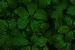 Planta verde da vegetação rasteira na luz solar morna Fotografia de Stock