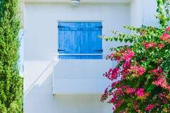 Planta verde de construção da palma Fotos de Stock Royalty Free