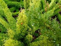 Planta verde de florecimiento con los dropplets 4k de la lluvia Imagen de archivo