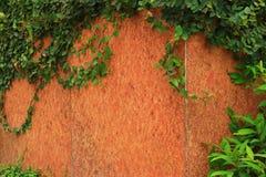 Planta verde de la enredadera stock de ilustración