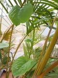 Planta verde de la hoja del jardín Foto de archivo libre de regalías
