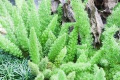 Planta verde decorada no jardim home Foto de Stock