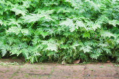 Planta verde decorada no jardim home Imagem de Stock Royalty Free