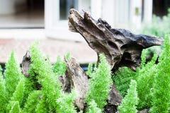 Planta verde decorada no jardim home Imagens de Stock Royalty Free
