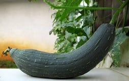 Planta verde del Loofah Fotografía de archivo libre de regalías