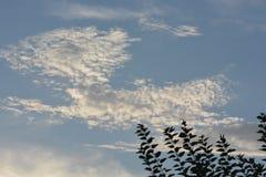 Planta verde del treesand con la nube Imagenes de archivo