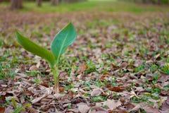 A planta verde e as folhas caem, fundo do outono Imagens de Stock Royalty Free