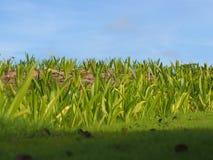 Planta verde e céu Fotos de Stock Royalty Free