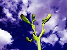 Planta verde e céu nebuloso imagens de stock royalty free